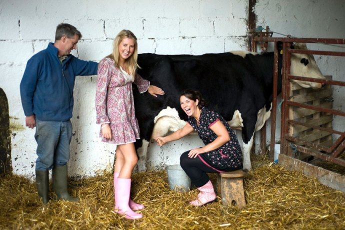 Laughter while a woman is milking a cow