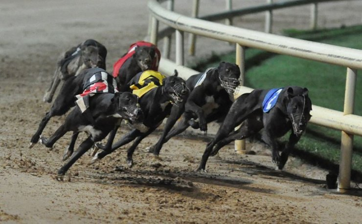 Greyhounds on the Track