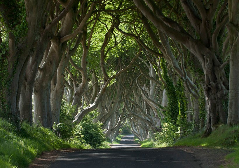The Dark Hedges  On Your Game of Thrones Tour