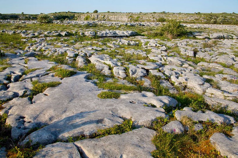 Irish Nature on the Burren Experience Guided Walks