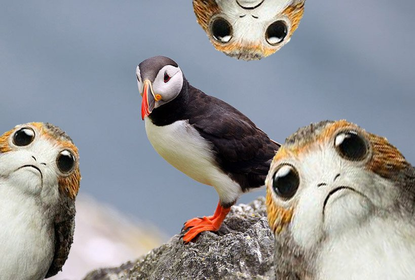 Porgs Were Partially Invented to Cover Up the Numerous Puffins on the Island